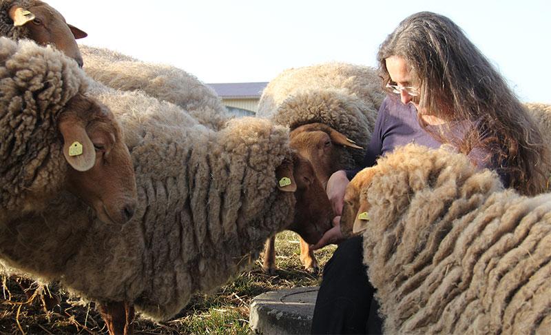 Silvana-Schafe-Fuettern-Weide-Wollfra